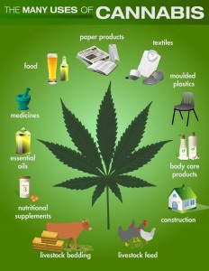 exploring the uses of marijuana for medical purposes Legalizing medical marijuana has not increased recreational use of the  out that  the intensity of marijuana use in teens has not been explored.